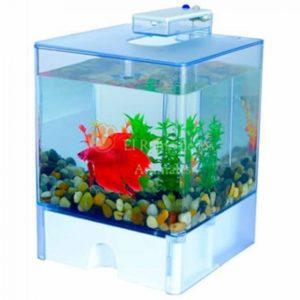 acuario box beta
