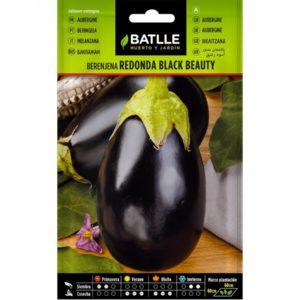 berenjena redonda black beauty batlle
